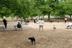 dog park in nashville