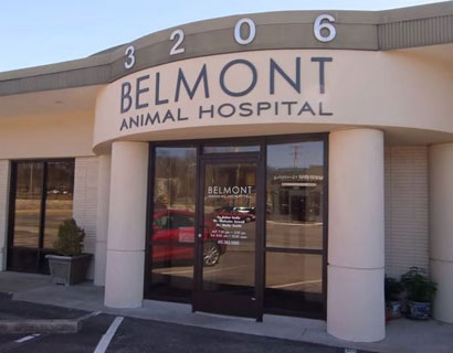 pet friendly nashville vet animal hospital in nashville tn